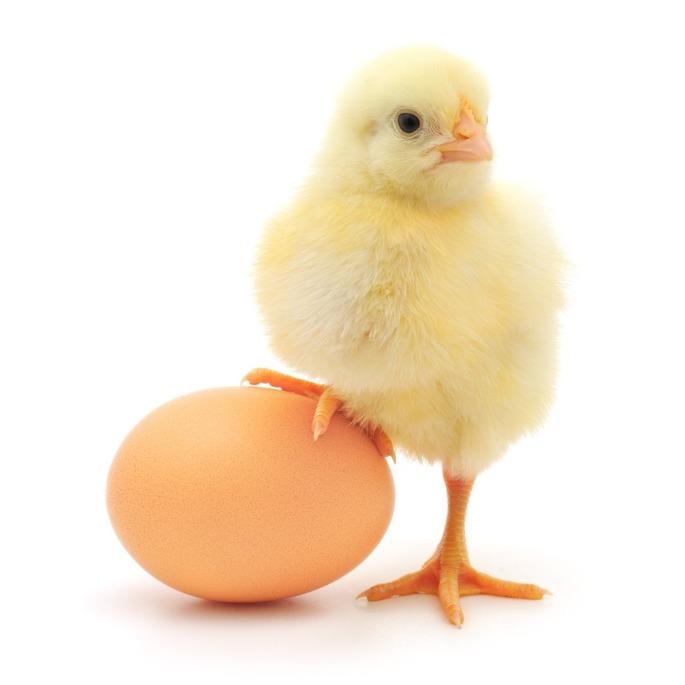 928273-chicken